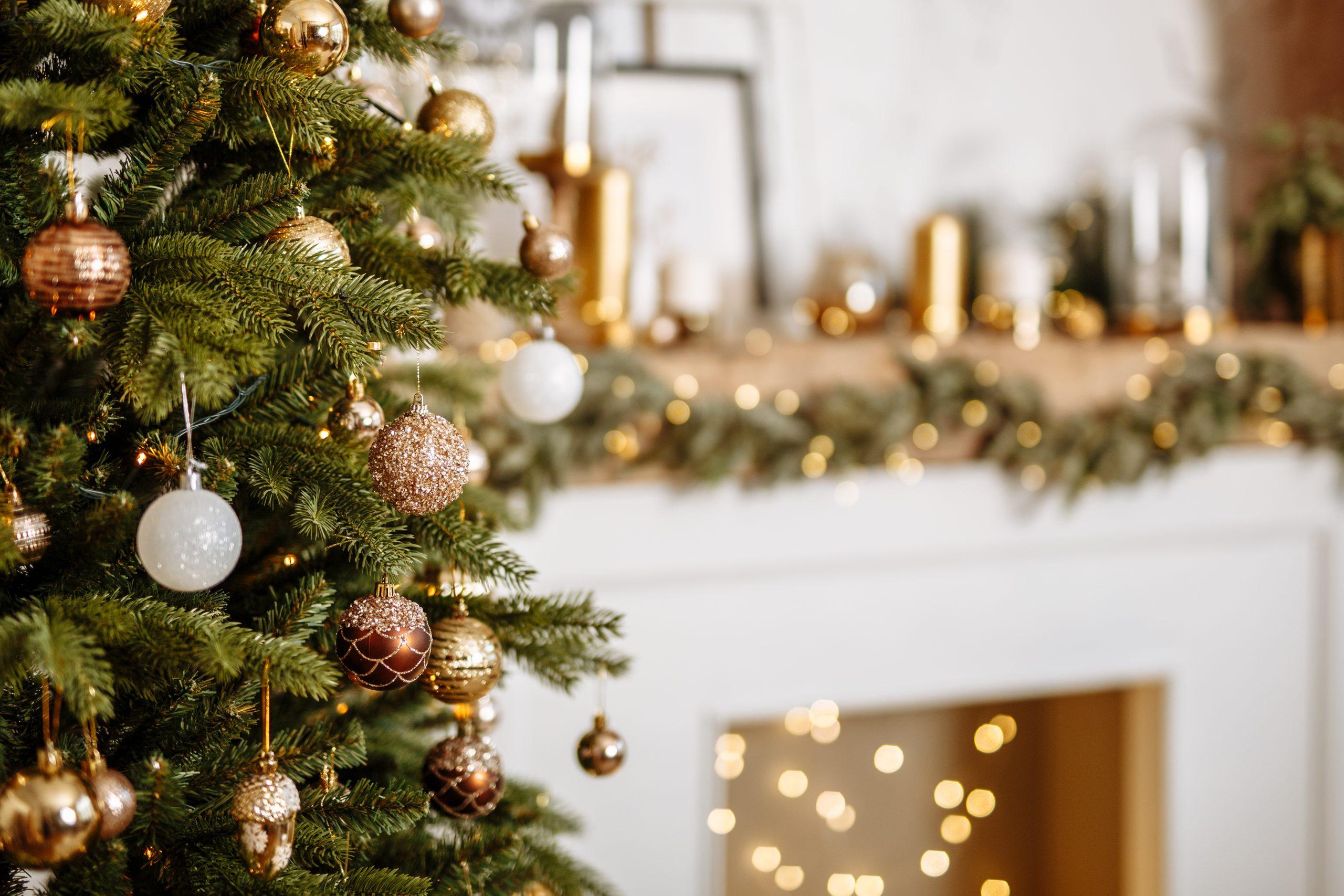 Biscotti Finti Per Albero Di Natale.Albero Di Natale Sostenibile Come Realizzarlo Rispettando L Ambiente Solonotizie24