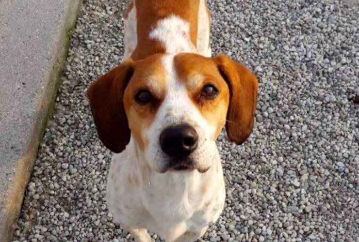 il tuo cane ti dice ti voglio bene - Solonotizie24