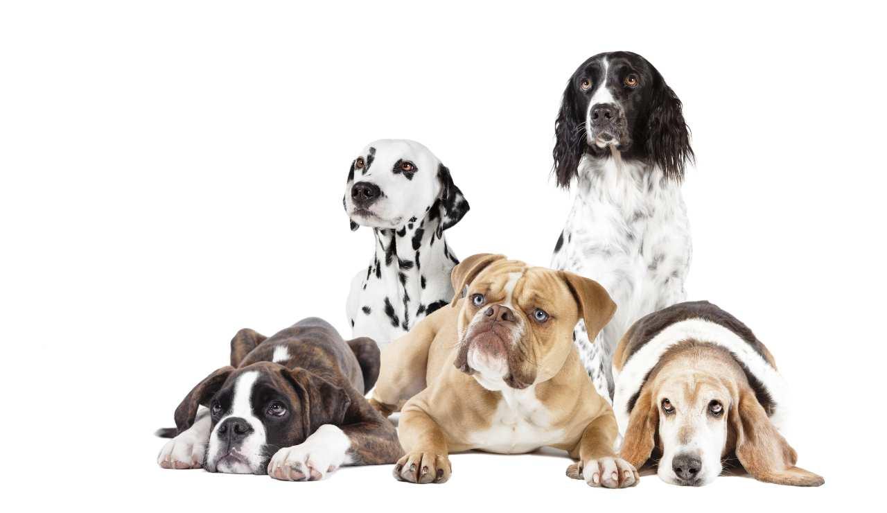 Cani e comportamenti da evitare-SoloNotizie24.it
