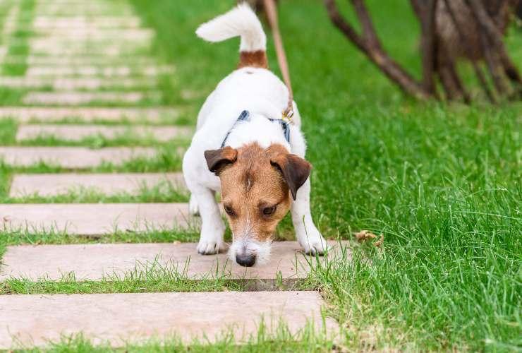 Lascia annusare il tuo cane-SoloNotizie24.it