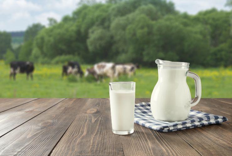 Latte- ricetta per sostituire la panna in cucina-SoloNotizie24.it