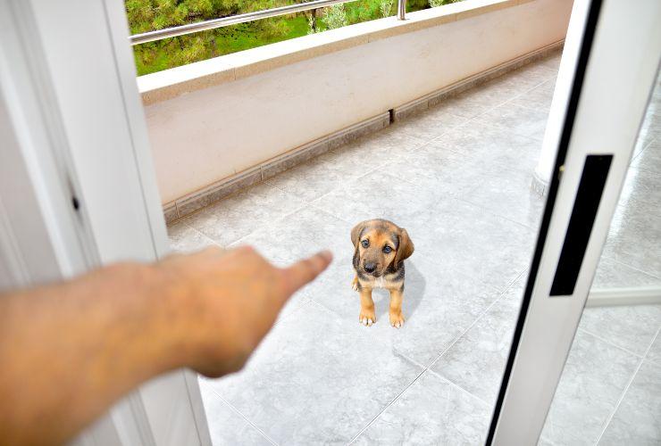 Non essere troppo duro con il tuo cane-SoloNotizie24.it