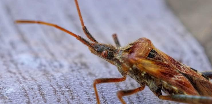 eliminare gli insetti da casa