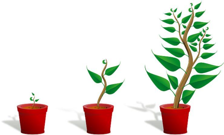piante di appartamento